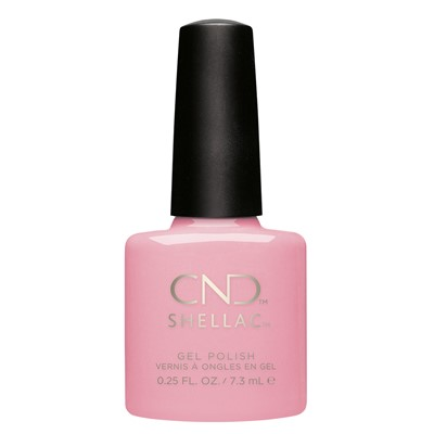 Blush Teddy, Shellac